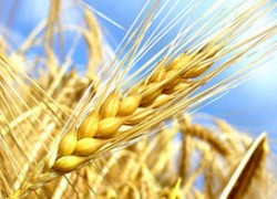 Résilience alimentaire, sécurité nationale et crise du covid 19