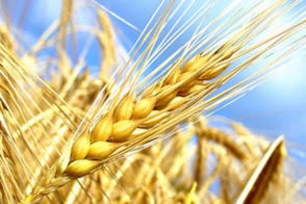 Tribune en faveur de l'enseignement agricole